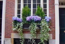 Nápady pre okenné parapety
