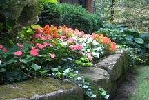 Annuals and Container Gardens