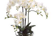 arranjo orquideas