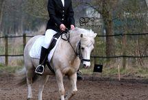 (My) horses