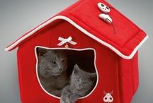 Des jolies choses pour chiens et chats !