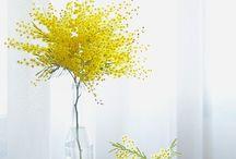 Primavera(Antonia)