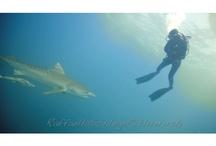 UNDERWATER: sea creatures and scuba diving