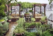 Takträdgårdar
