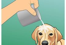 Dog Obedience and Care