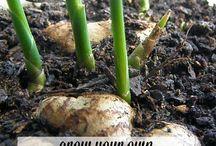 2 Gardening-grow lights