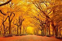 Autumn in Central Park / an (important) item from my bucket list - one day it can be checked off <3