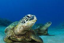 Vidas dos Mares e Oceanos
