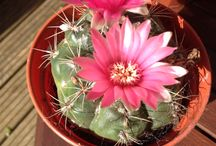 My cactus garden / These photos are of my cactus greenhouse
