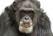 research _ primates