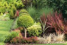 oo ogród z lustrem