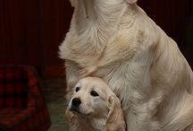 it's a dog's life / by Lisa Toyosaki