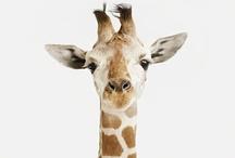 Жирафим