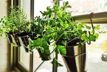 Indoor garden / by Marnie Loken
