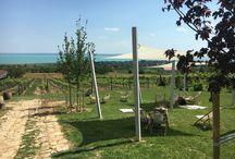 Balaton Wines