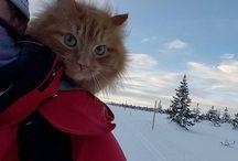 Gatos aventureros