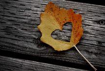 fall love / by Brooke Ossenkop