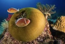 Reefs and Coral