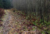 Naturensdronning / Turglede til inspirasjon  http://naturensdronning.blogspot.no