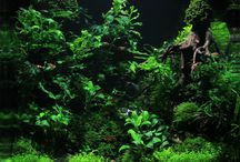 Aquarium:- Aquascapes & Aquascaping / A collection of beautiful aquascapes as well as some tips on scaping