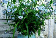 """*The Garden House book """"flower tour"""""""