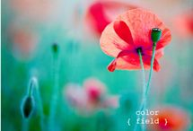 Color Combos / by Kristy Schalk