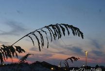 Pensacola Beach Sunsets  / Gorgeous beach sunsets. / by An'gel Ducote