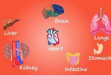 Medical Education | F1 Digitals
