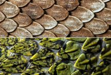 reptile patterns