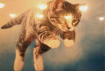 Psychedelic Animals / It's trippy, man. / by Jenn Bress