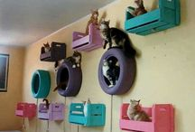 Gatos modelo de cuchas