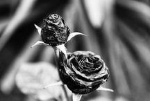 Black & White / by Valerio Calsolaro