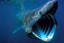 UK marine and freshwater wildlife