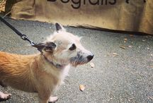 ADOPT A DOG / Natural Dogtails - Great for your dog's fur, mentality, and our Earth. www.DogtailsShop.com