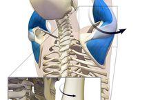Anatomisch yoga