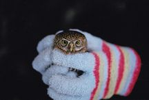 Owls Just Because / by Venus Marie Lay
