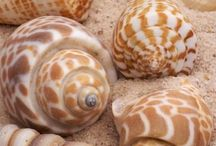 Shells / Different types of sea shells.