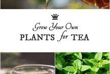 Herbaty/Czajniki/Latte