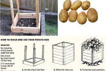 Patato grower