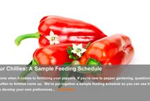 Fertilizing Peppers / Techniques and methods for feeding chillies throughout the season.