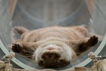 Otters / by Cassandra W