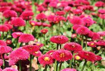 Floriade Canberra Flower Show 2014