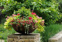 Beautiful plantings in pots