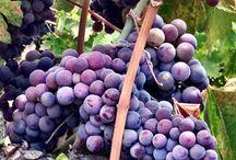 Musto Wine Grape Company, LLC. / #wine #winegrapes #winemaking #homewinemaking