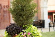 container planting / by Cheryl Yacovoni