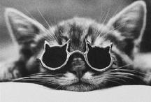 cats! / by ann mae delfin