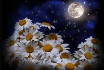 О цветах........