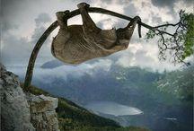 Éléphant grimpeur