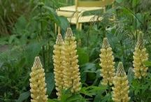 03.Yellow Gardens