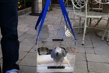 Bird Carrier & Travel Accessories